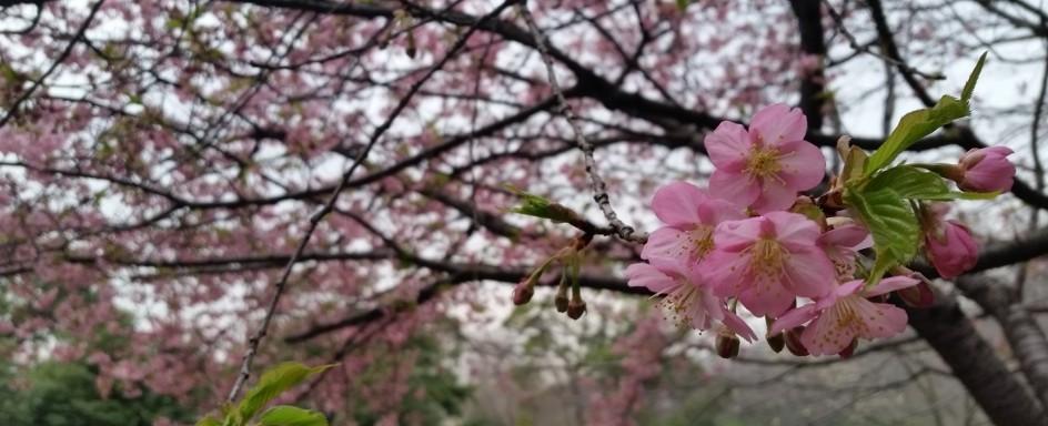 続・春の気配